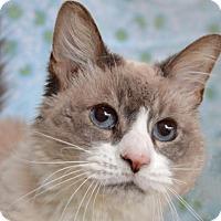 Adopt A Pet :: Cocco - Englewood, FL