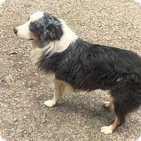 Adopt A Pet :: Chester - North Little Rock, AR