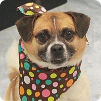 Adopt A Pet :: Bingo-PENDING - Garfield Heights, OH