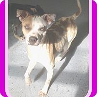Adopt A Pet :: JOLENE - Jersey City, NJ