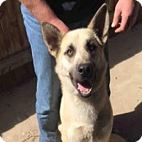 Adopt A Pet :: SARGE - Hanford, CA