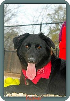 Border Collie Mix Dog for adoption in Eddy, Texas - Palmer