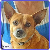 Adopt A Pet :: Kato - Eddy, TX