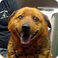 Adopt A Pet :: West - Greencastle, NC