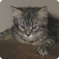 Adopt A Pet :: K-Leonard1-Cupcake - Colorado Springs, CO