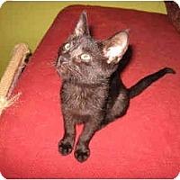 Adopt A Pet :: Patina - Colmar, PA
