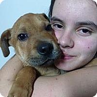Adopt A Pet :: Peter - South Jersey, NJ