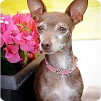 Adopt A Pet :: Roxie Heart - Orlando, FL