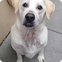 Adopt A Pet :: Newton - White River Junction, VT