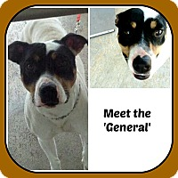 Adopt A Pet :: THE GENERAL - Malvern, AR
