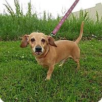 Adopt A Pet :: Peanut - Baton Rouge, LA