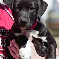 Adopt A Pet :: Jester - Columbus, GA