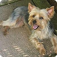 Adopt A Pet :: Jamie - Hamilton, ON