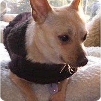 Adopt A Pet :: Kirby - Rigaud, QC