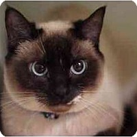 Adopt A Pet :: Bonnie - Portland, OR