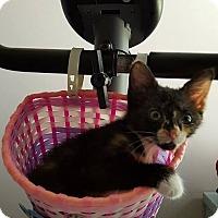 Adopt A Pet :: Petunia - McDonough, GA