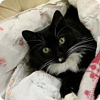 Adopt A Pet :: Kiki - Medina, OH