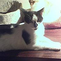 Adopt A Pet :: January - Philadelphia, PA