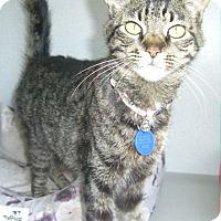 Adopt A Pet :: Poppy - Ogden, UT