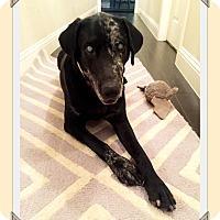 Adopt A Pet :: Mona - Austin, TX