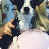 Adopt A Pet :: Larry - Kansas city, MO