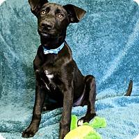 Adopt A Pet :: Gunner - Winters, CA