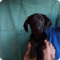 Adopt A Pet :: Ozzy - Oviedo, FL