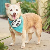 Adopt A Pet :: Bailey Terrier - Pacific Grove, CA