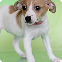 Adopt A Pet :: Erin - Waldorf, MD