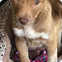 Adopt A Pet :: Mulligan - Marlton, NJ