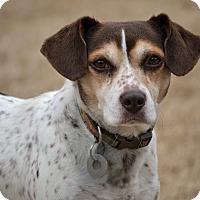 Adopt A Pet :: Alice - Southington, CT
