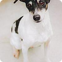 Adopt A Pet :: Beau super URGENT - Sacramento, CA