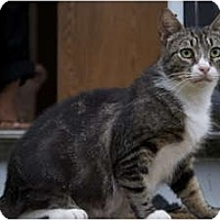 Adopt A Pet :: Big MaMa - New Egypt, NJ