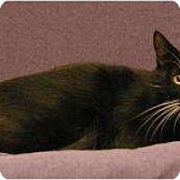 Adopt A Pet :: Heather - Sacramento, CA
