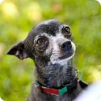 Adopt A Pet :: Pedro - New Orleans, LA
