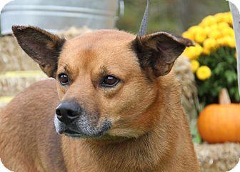 Shepherd (Unknown Type)/Hound (Unknown Type) Mix Dog for adoption in Marietta, Ohio - Buddy (Neutered)