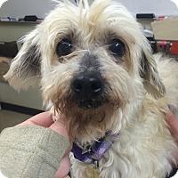 Adopt A Pet :: Inez - Oak Ridge, NJ