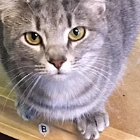Adopt A Pet :: Chiara - Holly Springs, MS