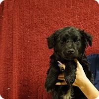 Adopt A Pet :: Speed - Oviedo, FL
