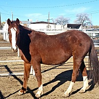 Adopt A Pet :: Bambi - Aztec, NM