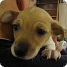 Adopt A Pet :: Baby Moe