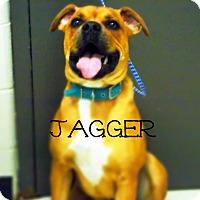 Adopt A Pet :: Jagger - Defiance, OH