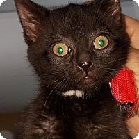 Adopt A Pet :: LaLa - Freeport, NY