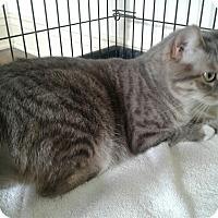 Adopt A Pet :: Lexie - Lake Charles, LA