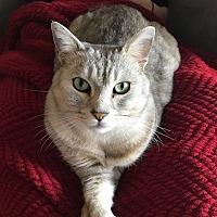 Adopt A Pet :: Casanova - San Jose, CA