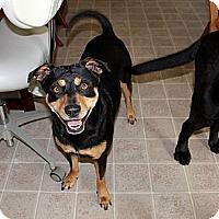 Adopt A Pet :: Roxy - Nolensville, TN