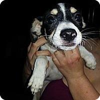Adopt A Pet :: Jackie - South Jersey, NJ