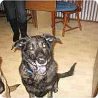 Adopt A Pet :: Jock - Senior Shep Mix - Alliance, OH