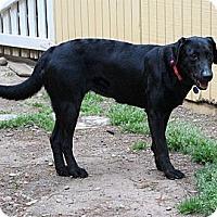 Adopt A Pet :: Lindsay - Cumming, GA