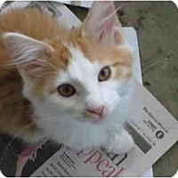 Adopt A Pet :: Pistol Pete - Jeffersonville, IN